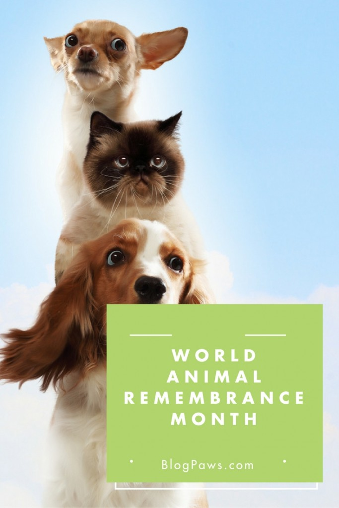 World Animal Remembrance Month