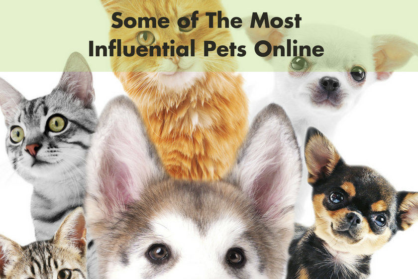 Some of The Most Influential Pets Online