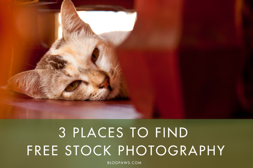 3 Places to Find Free Stock Photography | BlogPaws.com
