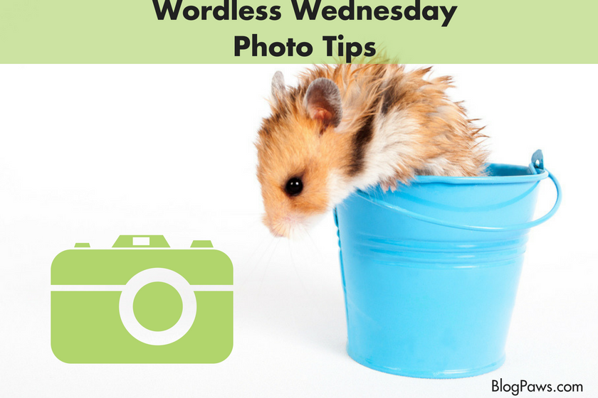 blog photo tips