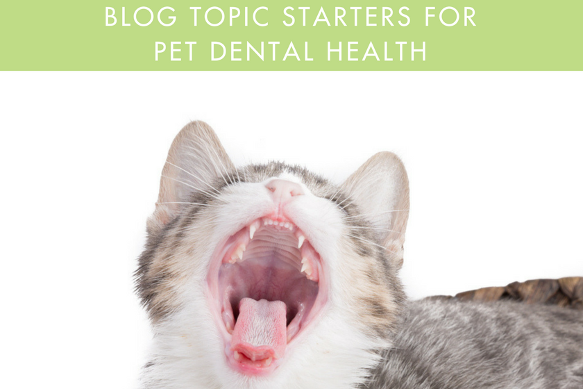 Ideas for pet dental health month