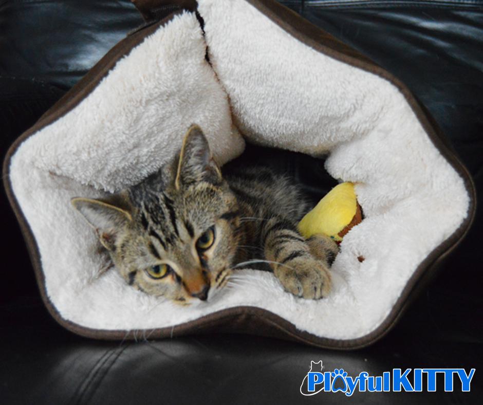 Robin Mudge Dexter in the CuddleMuff