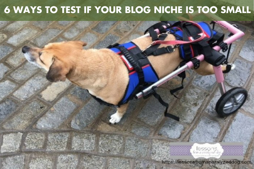 6 Ways to Test if Your Blog Niche is Too Small - BlogPaws.com