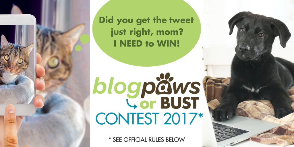BlogPaws or Bust Contest 2017