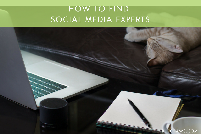 where to find social media pros