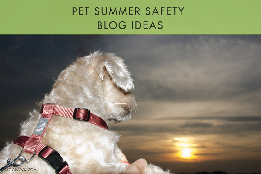 Pet blog summer safety ideas