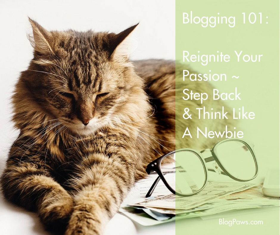 blogging 101 think like a newbie