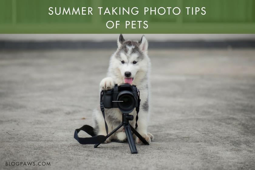 Summer Taking Photo Tips