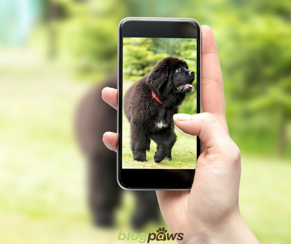 How to do IG account for pet