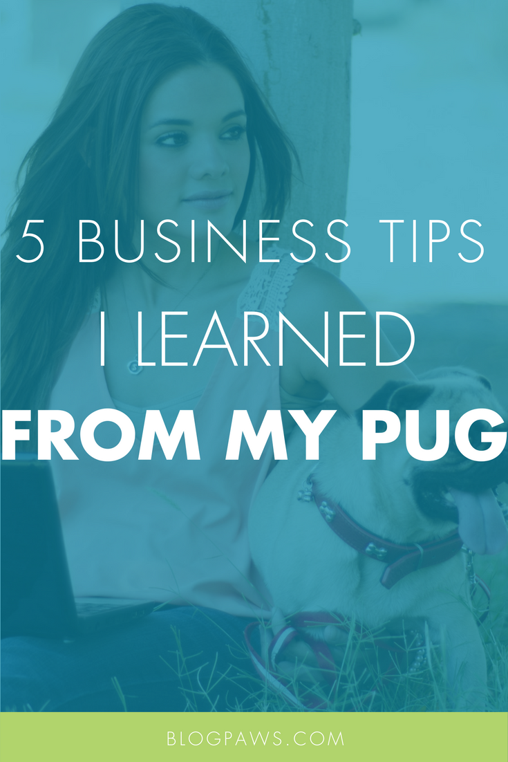 5 Business Tips I Learned From My Pug