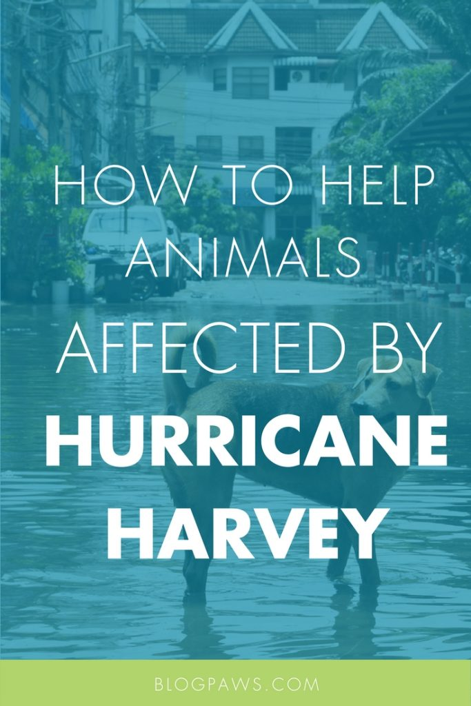 Hurricane Harvey animals