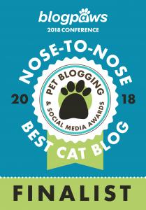 Best Cat Blog