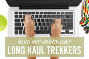 blog hop wednesday