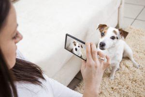 taking photo of pet