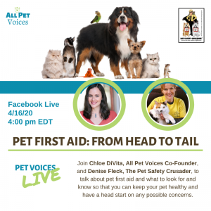 Pet First Aid Head to Tail
