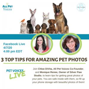 Pet Photography - Silver Paw Studio