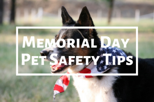 Memorial Day Pet Safety Tips