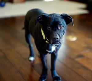 Onyx the dog
