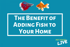 The Benefit Of Adding Fish To Your Home