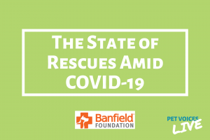 The State of Rescues Amid COVID-19