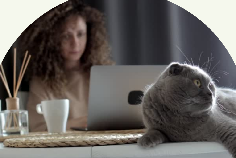 woman sitting at desk behind computer with grey cat sitting on desk in front of her