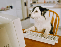 Petbloggers