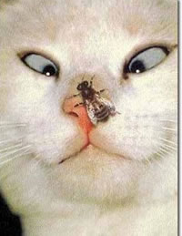 Cross_eyed_cat