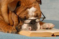 Bulldog-reading