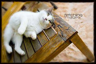 Catweek2