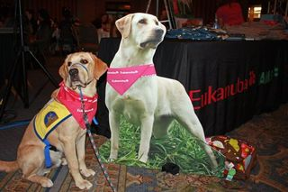Blogpaws111