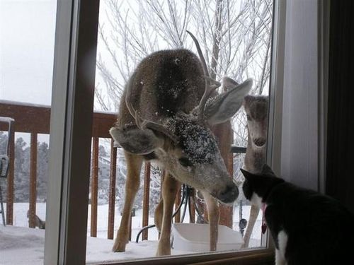 Kittens-deer-window
