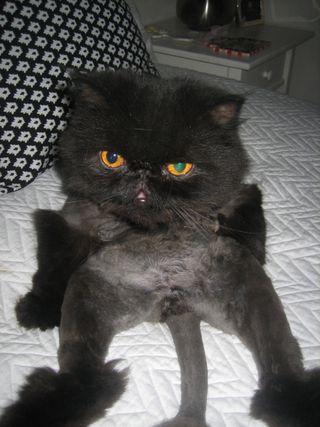 Catweek