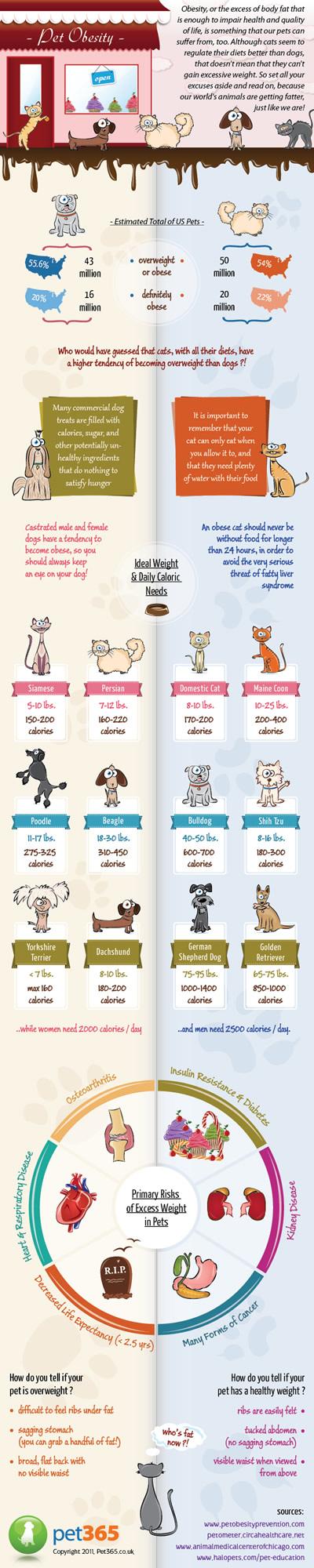Pet-obesity-infographic