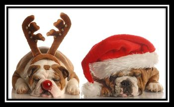 Merry-christmas-dogs