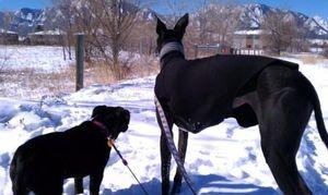 Winter-walks-with-twiggy