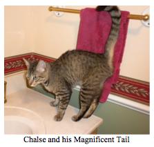 Chalse tail