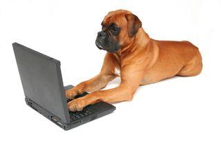 Dog_Computer