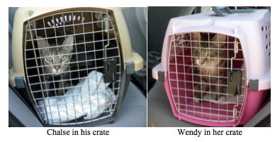 Chalse wendy rescue