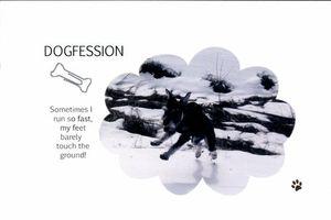Dogfession