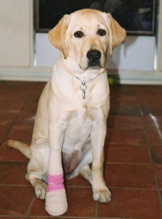 D.Taiga bandaged foot