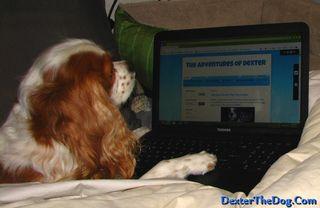 Dogblogging