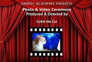 Anipal Academy Awards